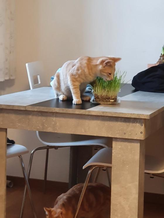 Katzengras teil 1
