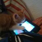Cero spielt Pokemon