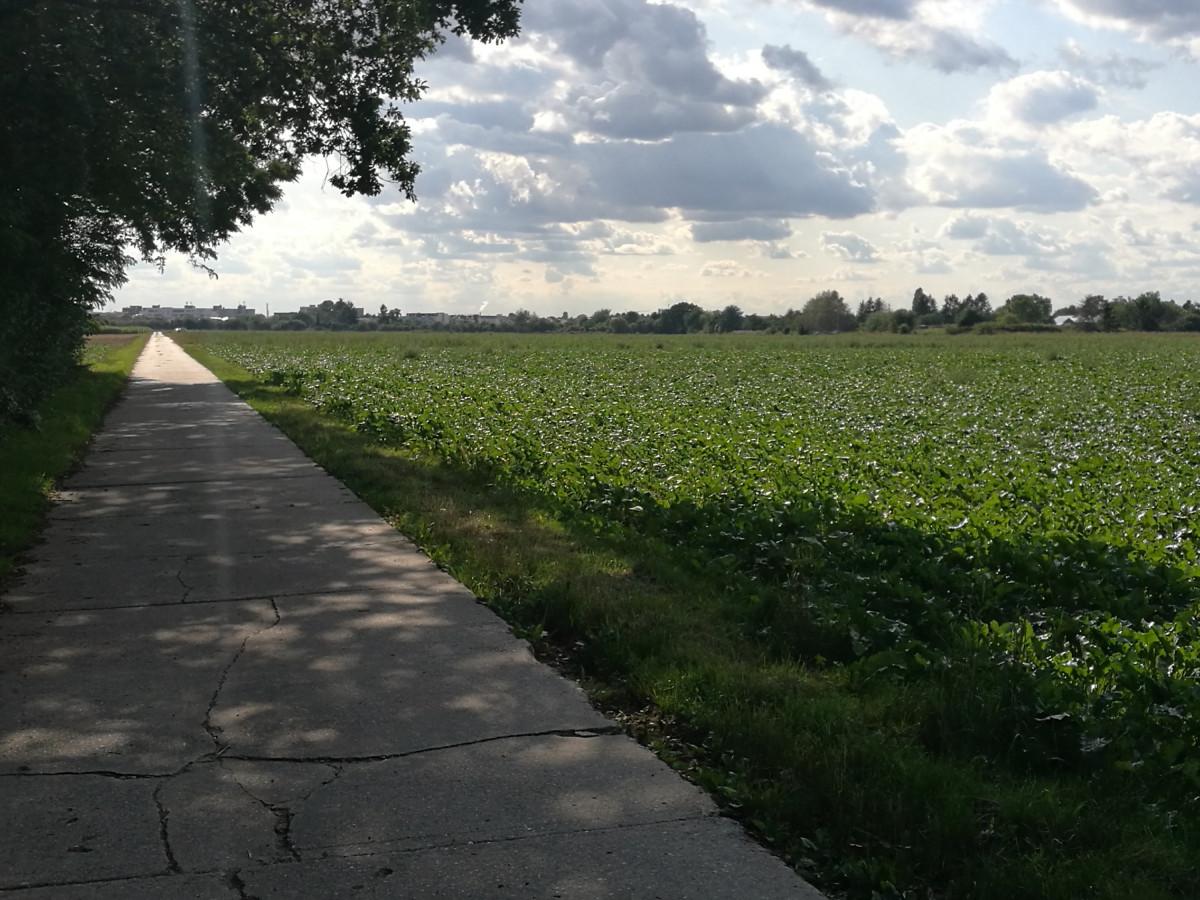 Mitten durch die Felder auf dem Rückweg