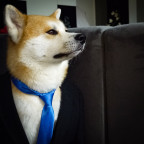Business Doggo