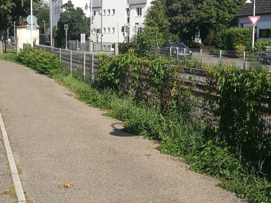 Jogging Route 2