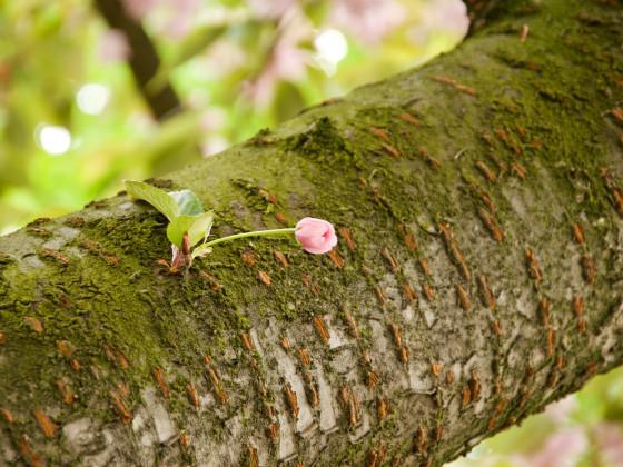 Der Frühling ... er kommt langsam ...