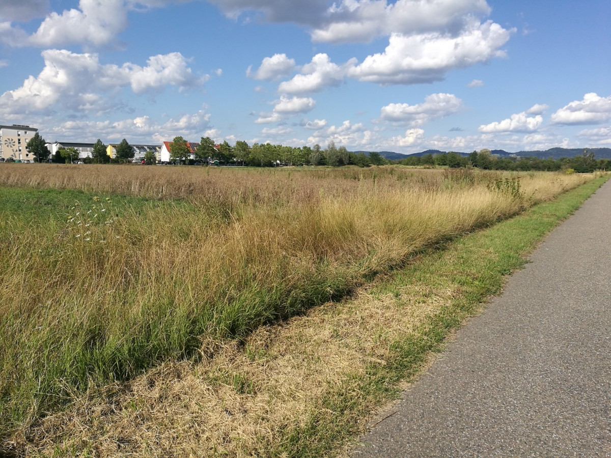 Jogging Route- Feld