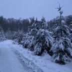 Schnee gibts hier auch