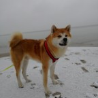 Mein Doggo