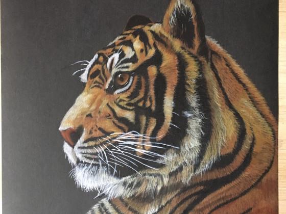 Mein Tiger