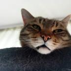 Verschlafene Katzen sind die besten Katzen.