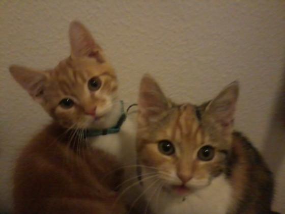 Meine Katzen Cero und Baki